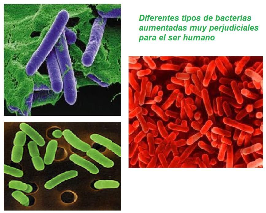 bacterias.png